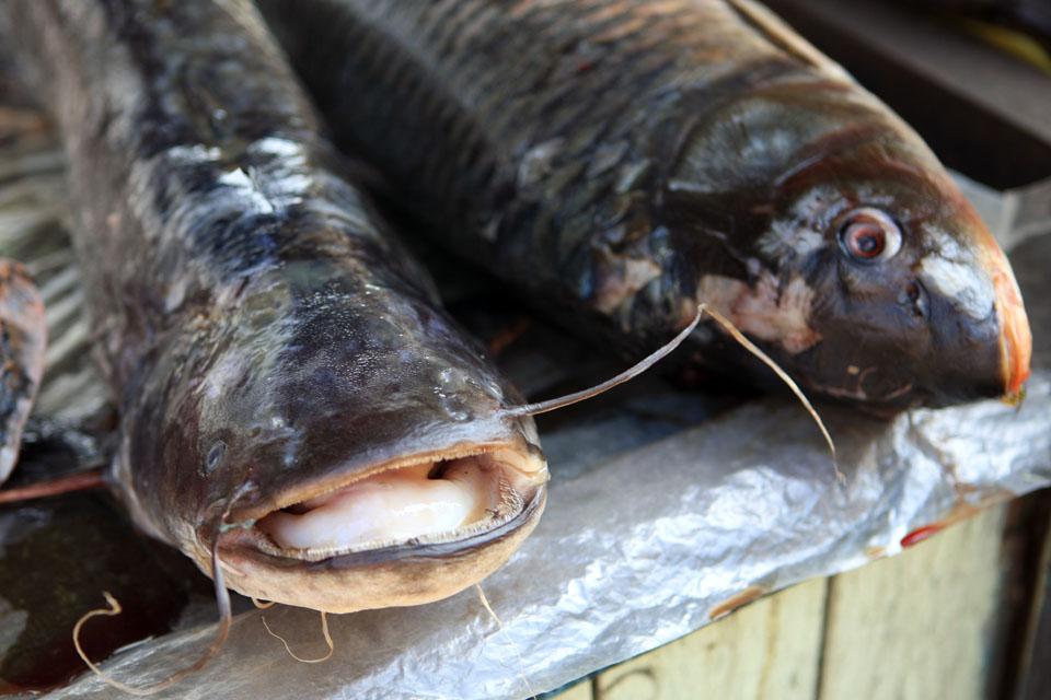 клев рыбы в кинешме